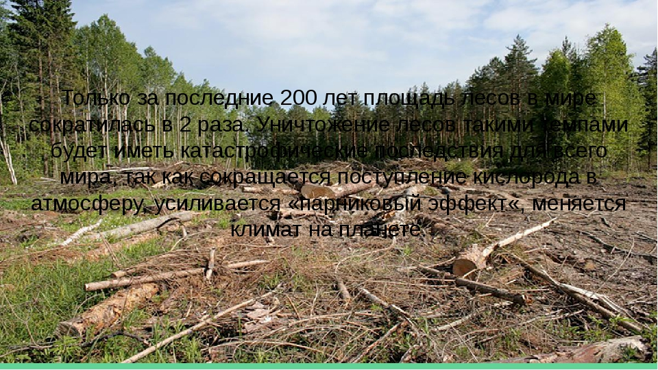 Только за последние 200 лет площадь лесов в мире сократилась в 2 раза. Уничто...
