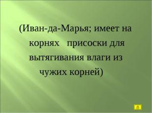 (Иван-да-Марья; имеет на корнях присоски для вытягивания влаги из чужих корн