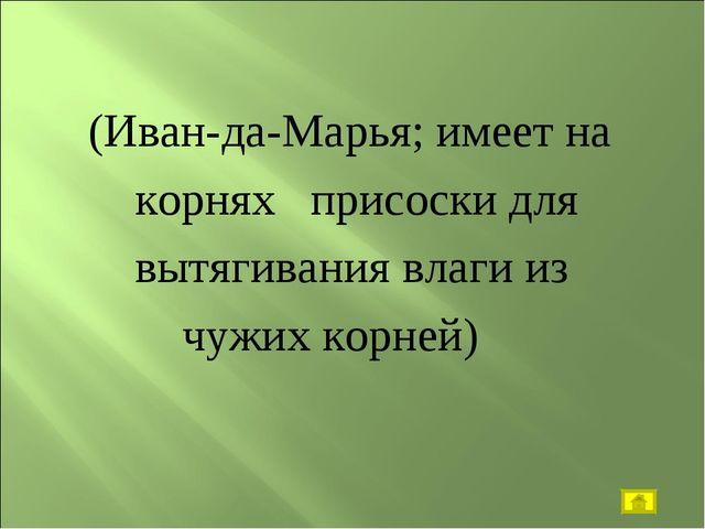 (Иван-да-Марья; имеет на корнях присоски для вытягивания влаги из чужих корн...