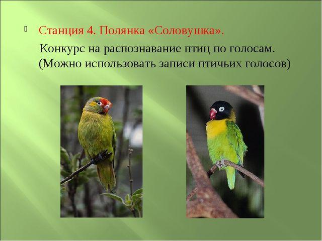 Станция 4. Полянка «Соловушка». Конкурс на распознавание птиц по голосам. (Мо...