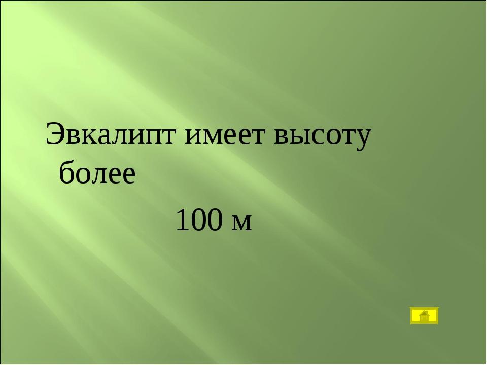 Эвкалипт имеет высоту более 100 м