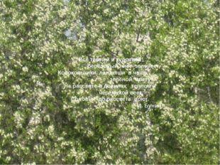 Всё темней и кудрявей берёзовый лист зеленеет, Колокольчики, ландыши в чаще