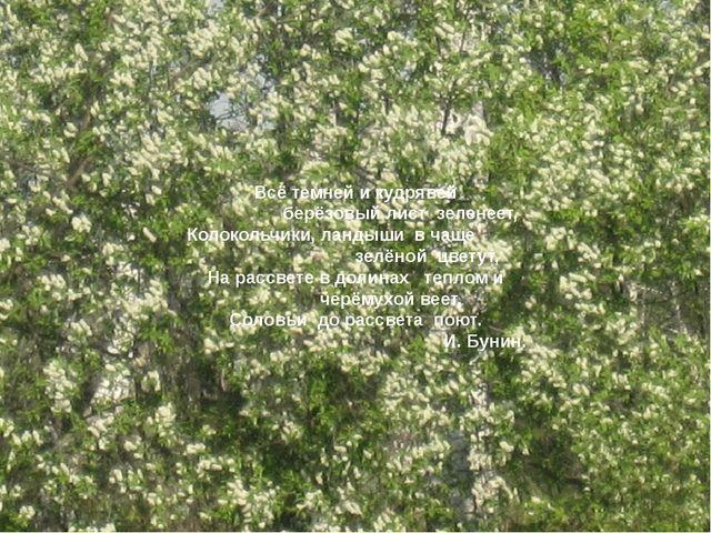 Всё темней и кудрявей берёзовый лист зеленеет, Колокольчики, ландыши в чаще...