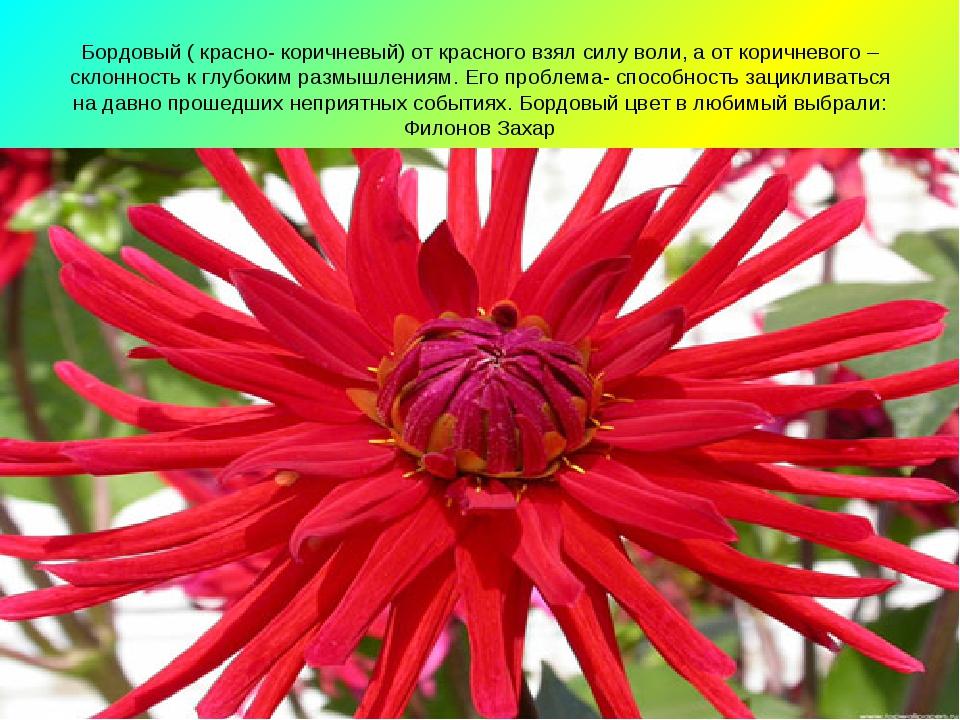 Бордовый ( красно- коричневый) от красного взял силу воли, а от коричневого –...