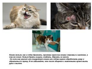 Кошек нельзя, как и собак дразнить, признаки агрессии кошки: мяуканье и шипен