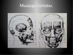 Мышцы головы.