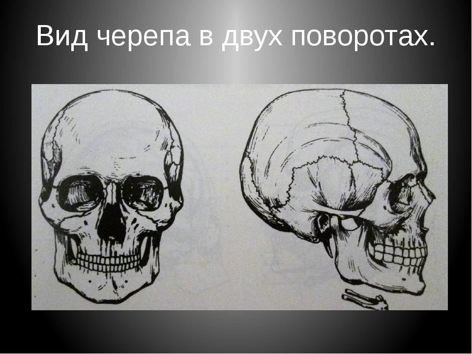 Вид черепа в двух поворотах.