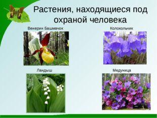 Растения, находящиеся под охраной человека Венерин Башмачок Ландыш Колокольчи