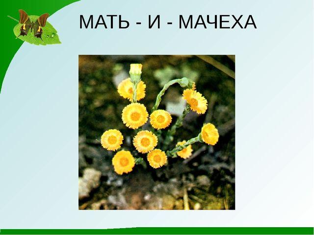 МАТЬ - И - МАЧЕХА
