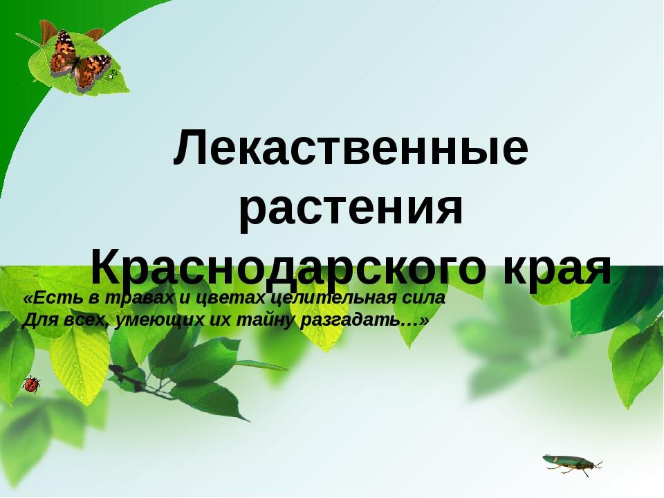 Лекаственные растения Краснодарского края «Есть в травах и цветах целительная...