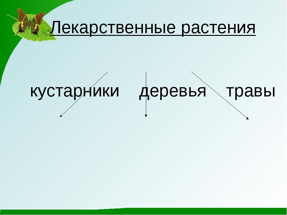 Лекарственные растения кустарники деревья травы