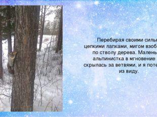 Перебирая своими сильными цепкими лапками, мигом взобралась по стволу дерева.