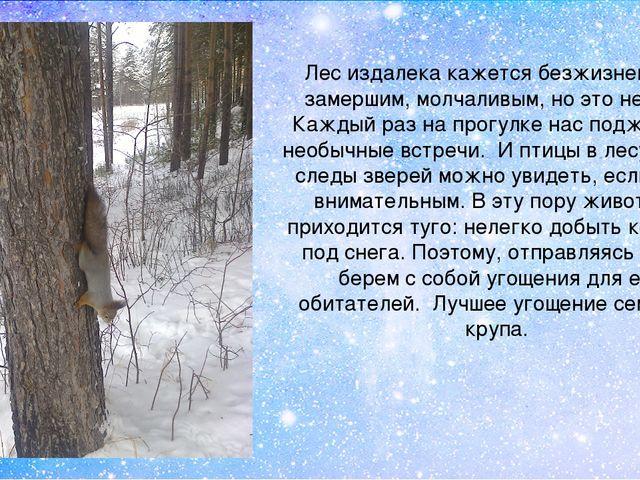 Лес издалека кажется безжизненным, замершим, молчаливым, но это не так. Кажды...