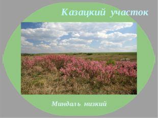 Казацкий участок Миндаль низкий
