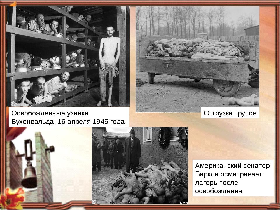 Освобождённые узники Бухенвальда, 16 апреля 1945 года Отгрузка трупов Америка...
