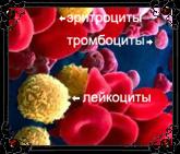 hello_html_m6d200958.jpg