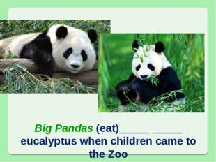 Big Pandas (eat)_____ _____ eucalyptus when children came to the Zoo