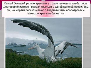 Самый большой размах крыльев у странствующего альбатроса. Достоверно измерен