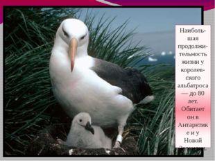 Наиболь- шая продолжи-тельность жизни у королев-ского альбатроса — до 80 лет