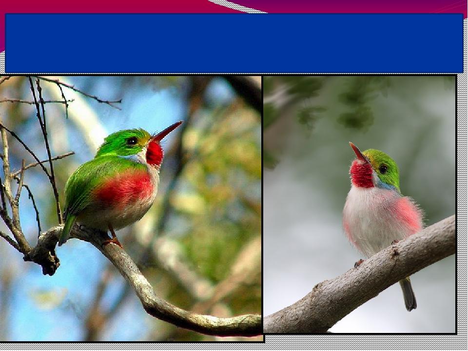 Самая прожорливая птица - кубинский тоди, живущийна островах Вест-Индии. Каж...