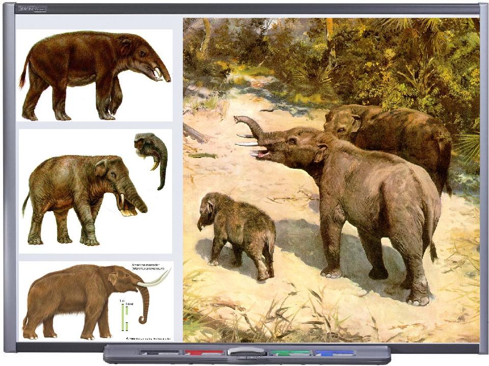 evolution of animals - 960×720