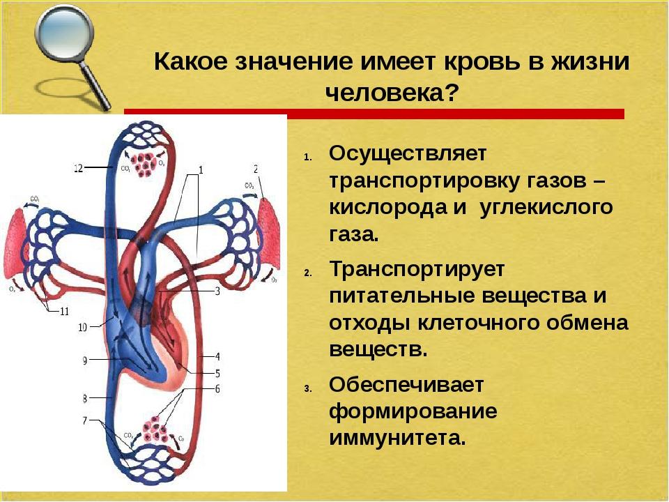 Какое значение имеет кровь в жизни человека? Осуществляет транспортировку га...
