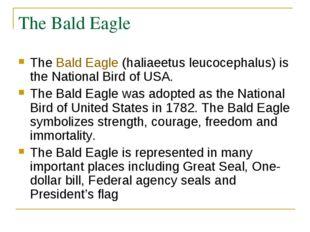 The Bald Eagle TheBald Eagle(haliaeetus leucocephalus) is the National Bird