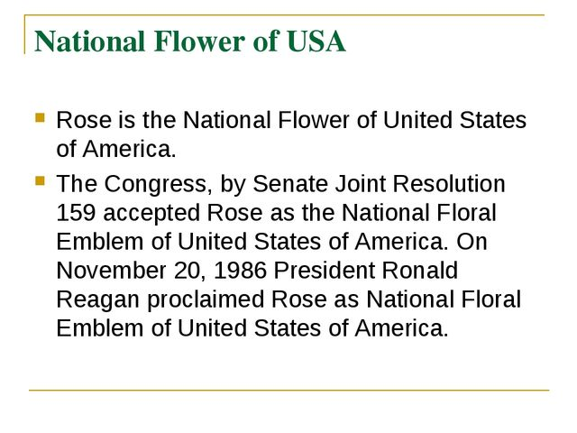 National Flower of USA Rose is the National Flower of United States of Americ...