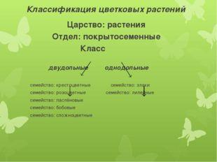 Классификация цветковых растений Царство: растения Отдел: покрытосеменные Кла