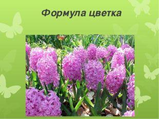 Формула цветка О3+3Т3+3П1