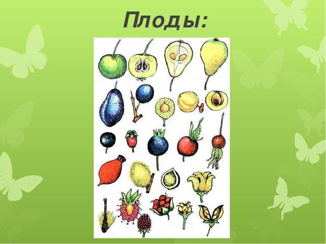 Плоды: