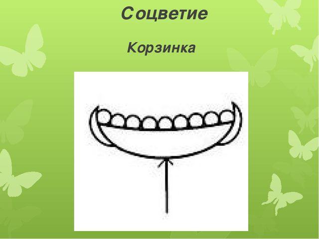 Соцветие Корзинка