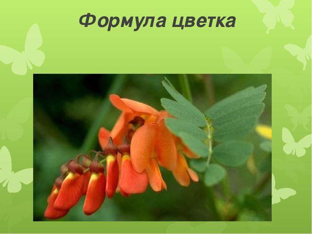 Формула цветка Ч5Л(2)+2+1Т(9)+1П1