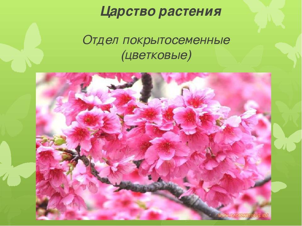 Царство растения Отдел покрытосеменные (цветковые)