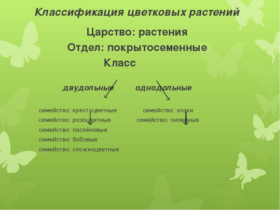 Классификация цветковых растений Царство: растения Отдел: покрытосеменные Кла...
