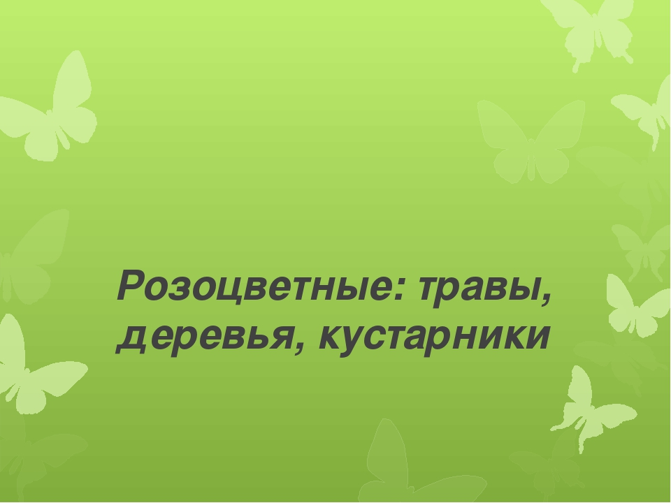 Розоцветные: травы, деревья, кустарники