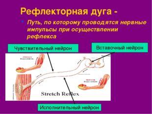 Рефлекторная дуга - Путь, по которому проводятся нервные импульсы при осущест