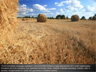 Почти половину площади занимают сельскохозяйственные угодья (распахано 30% в