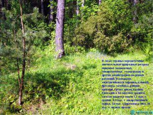 В лесах страны сосредоточены значительные природные ресурсы пищевых медоносны