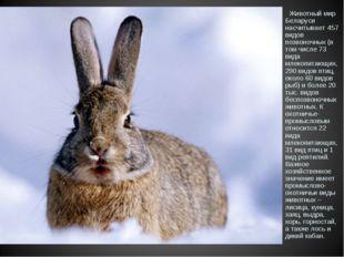 Животный мир Беларуси насчитывает 457 видов позвоночных (в том числе 73 вида