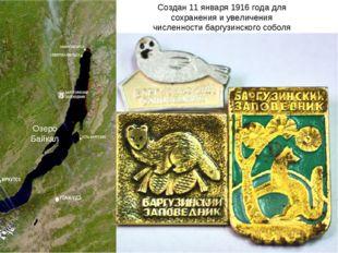 Создан 11 января 1916 года для сохранения и увеличения численности баргузинск