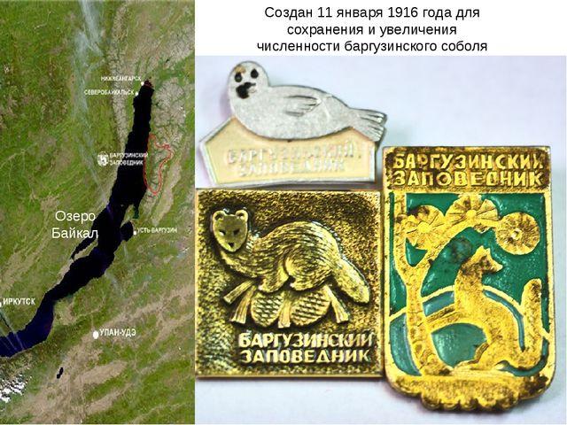 Создан 11 января 1916 года для сохранения и увеличения численности баргузинск...