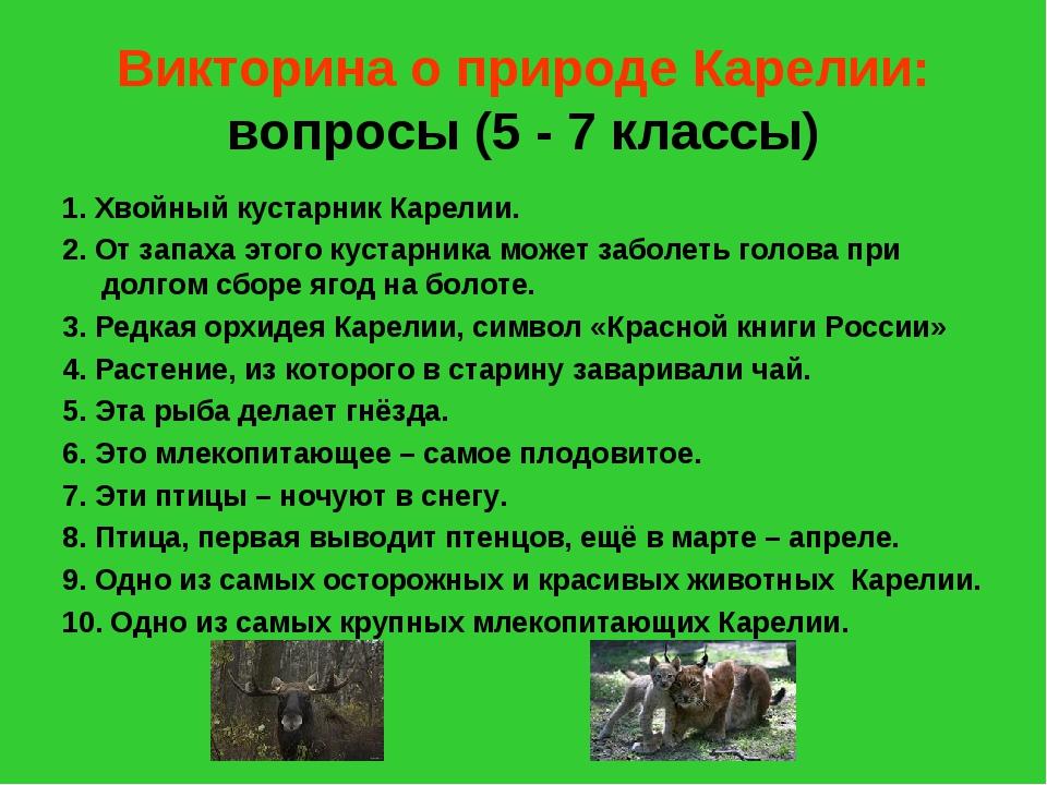 Викторина о природе Карелии: вопросы (5 - 7 классы) 1. Хвойный кустарник Каре...