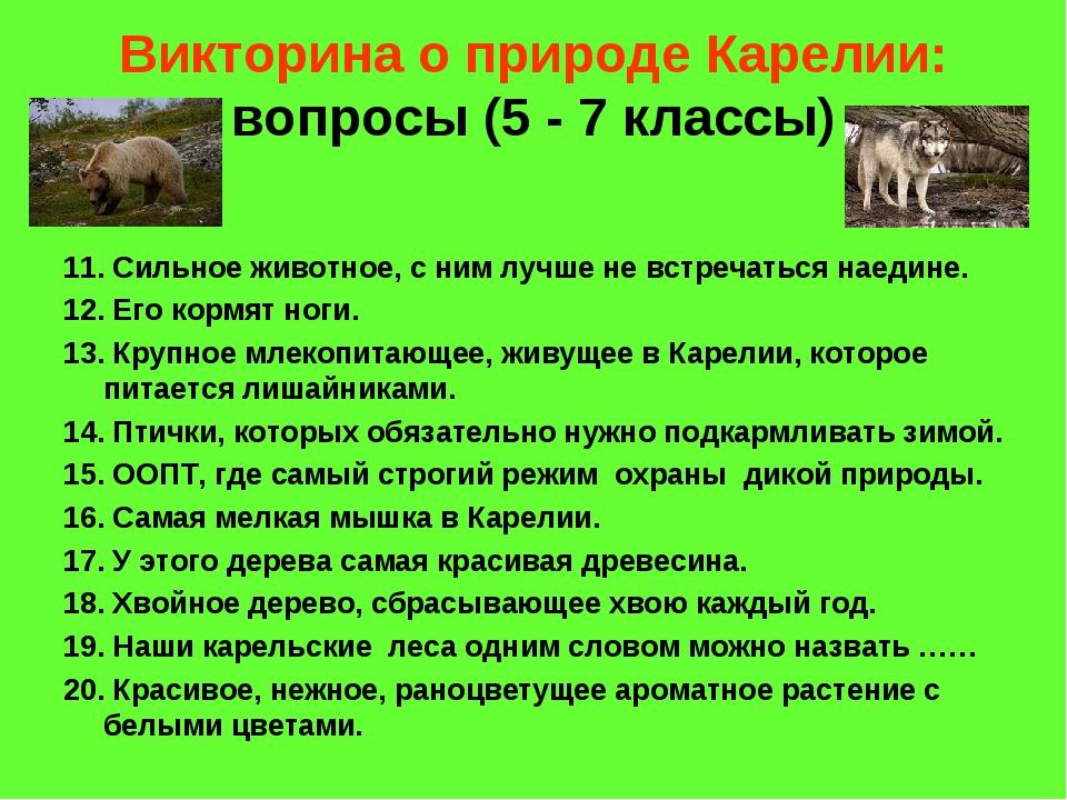 Викторина о природе Карелии: вопросы (5 - 7 классы) 11. Сильное животное, с н...