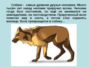Собаки - самые древние друзья человека. Много тысяч лет назад человек прируч