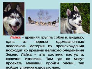 Лайка – древняя группа собак и, видимо, одна из первых одомашненных человеко