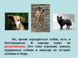 Но, кроме породистых собак, есть и беспородные. В народе зовут их дворняжкам