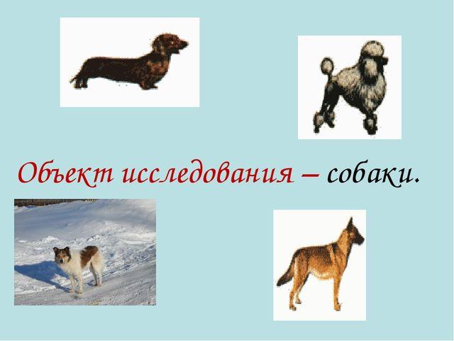 Объект исследования – собаки.