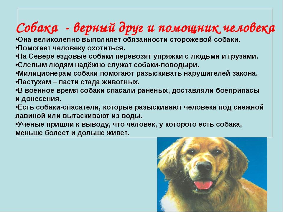 Собака - верный друг и помощник человека Она великолепно выполняет обязаннос...