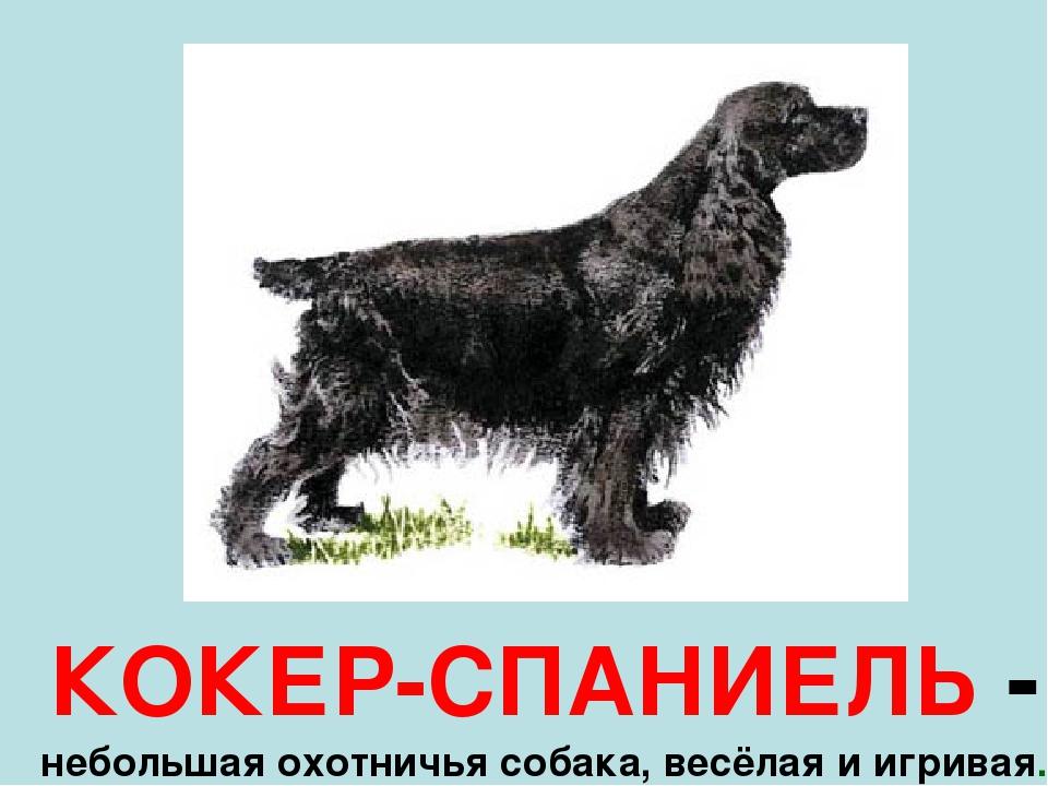 КОКЕР-СПАНИЕЛЬ - небольшая охотничья собака, весёлая и игривая.